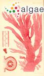 Rhodophyllis barkerae Harvey