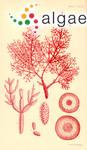 Chondria articulata var. gracilis C.Agardh