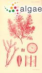 Erythroclonium muelleri Sonder