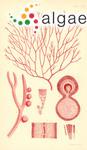 Stenocladia furcata (Harvey) J.Agardh