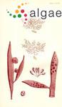 Chondria lanceolata Harvey