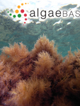 Cornea capillacea (S.G.Gmelin) Stackhouse