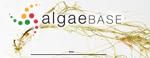 Flabellia petiolata (Turra) Nizamuddin
